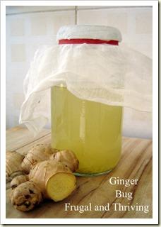 homemade wild fermented ginger beer {part one} - making the ginger bug
