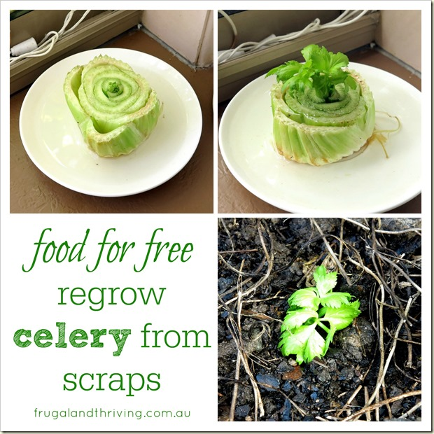 food for free celery from scraps