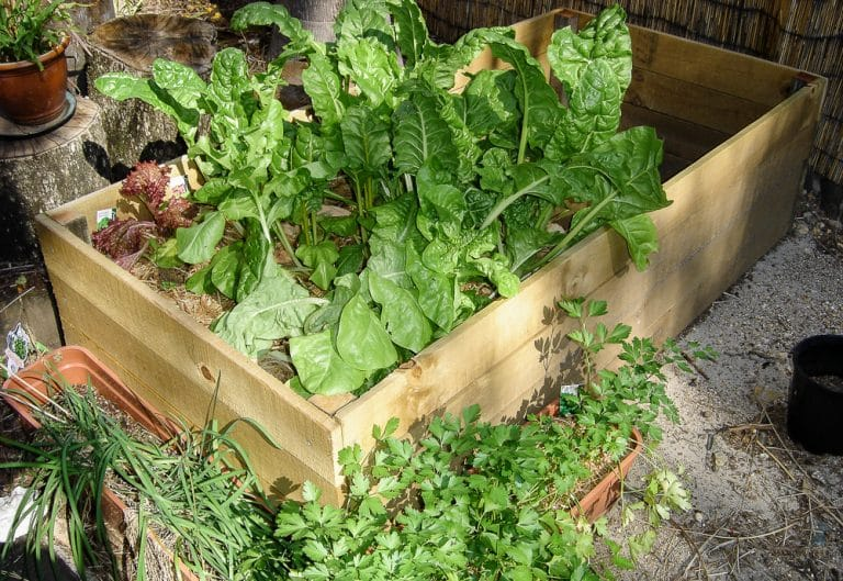 DIY Garden Box – How to Make a Raised Garden Bed