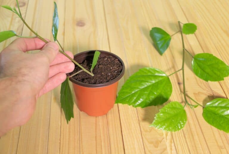 Gardening For Free Part Two – Taking Cuttings